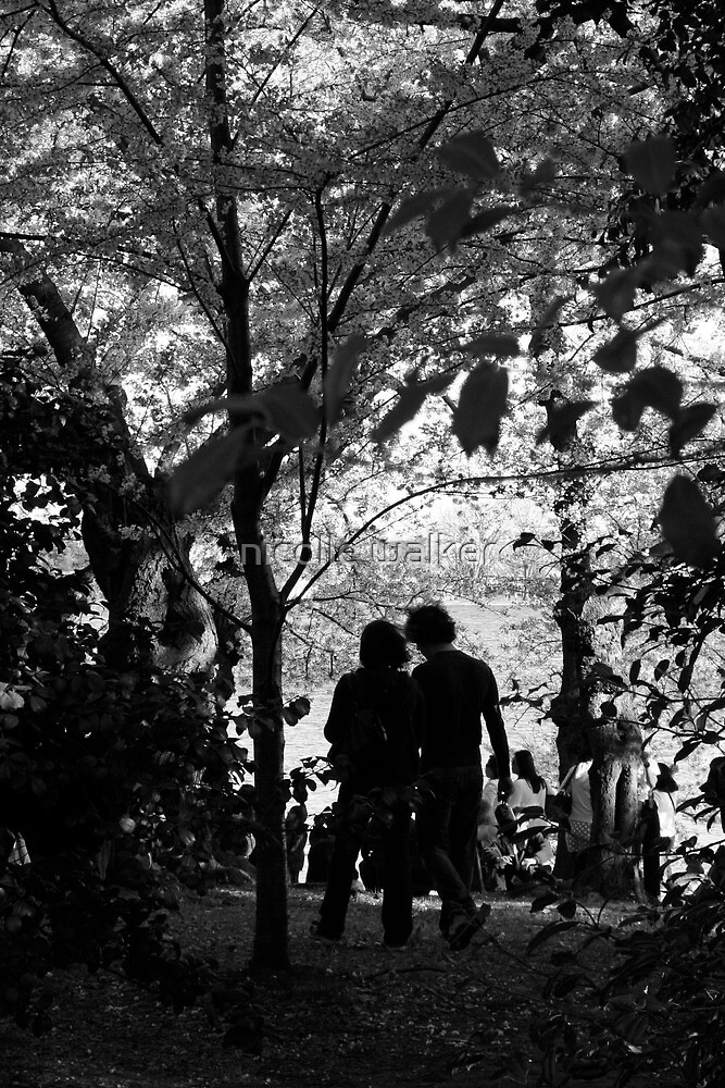 dc cherry blossoms-lovers b&w by nicolle walker