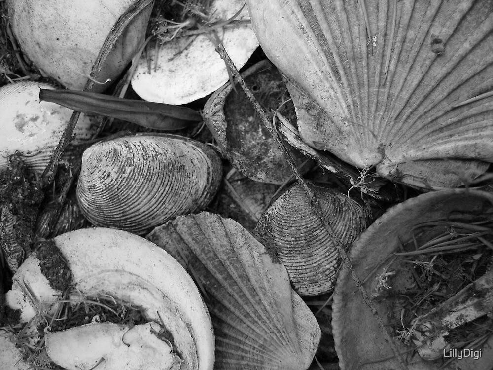 Old shells. by LillyDigi