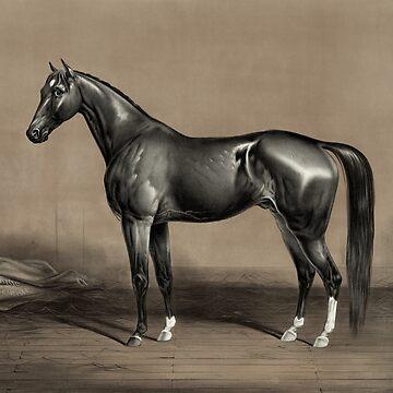 Trotting Champion Stallion - Mambrino - Vintage Horse Racing Print by warishellstore
