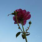 Beauty in bloom by mowieb