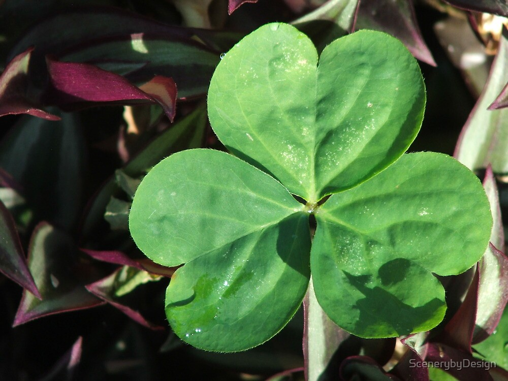 The Luck Of The Irish by ScenerybyDesign