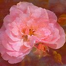 Vintage Pink Textured Rose by Joy Watson