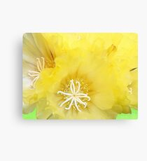 The Heart of a Cactus Canvas Print