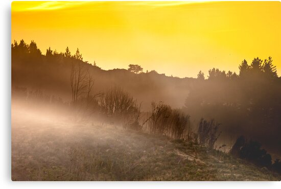 Golden start to a new day by Shane Harris