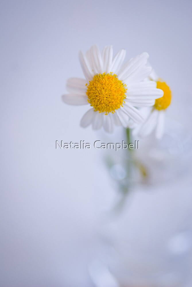 flowers seem intended for the solace of ordinary humanity... by Natalia Campbell