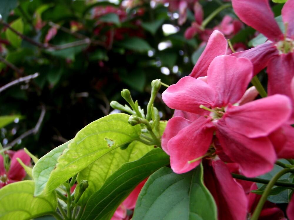 Little Kous Koalis flower by KatieLee648