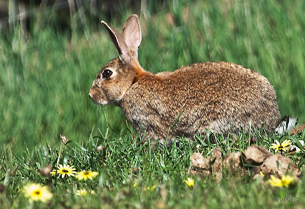 Thought I Saw A Wabbit by annibels
