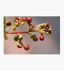 Berries Photographic Print