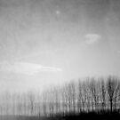Dusk by ROSE DEWHURST