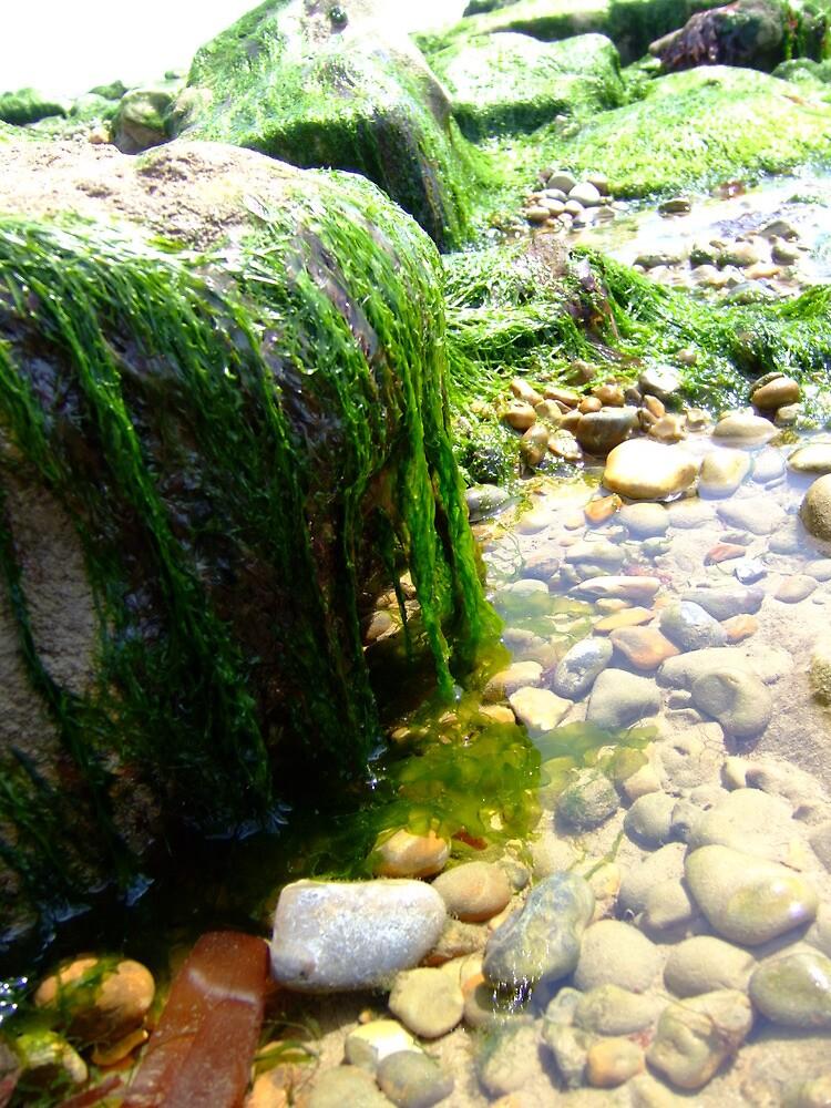 seaweed - hythe by kenkrash