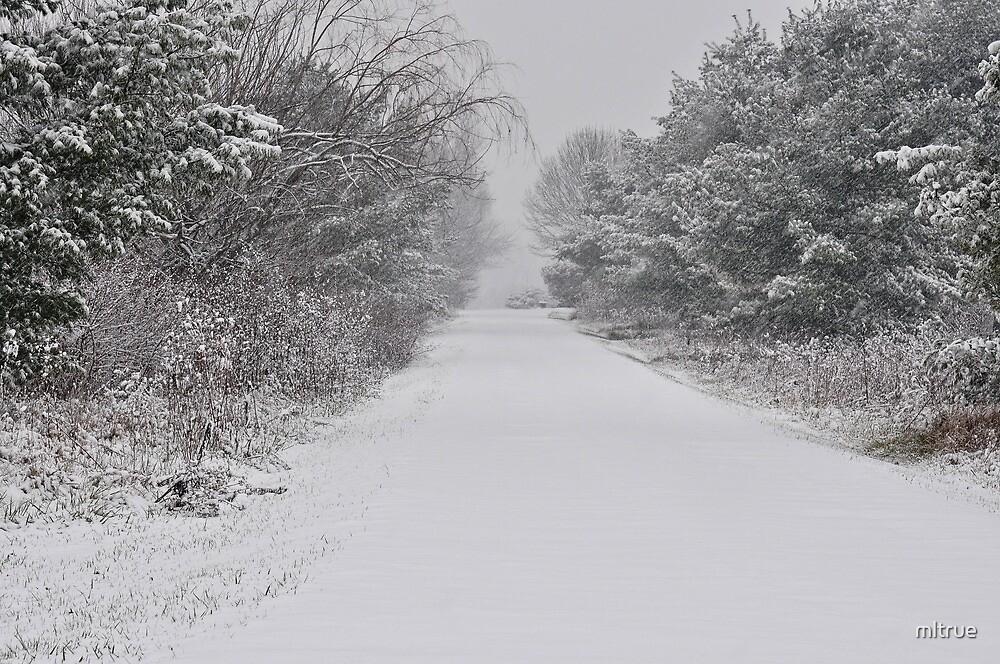 Wintry Path by mltrue