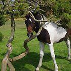 Bodmin Moor Pony Foal by lezvee