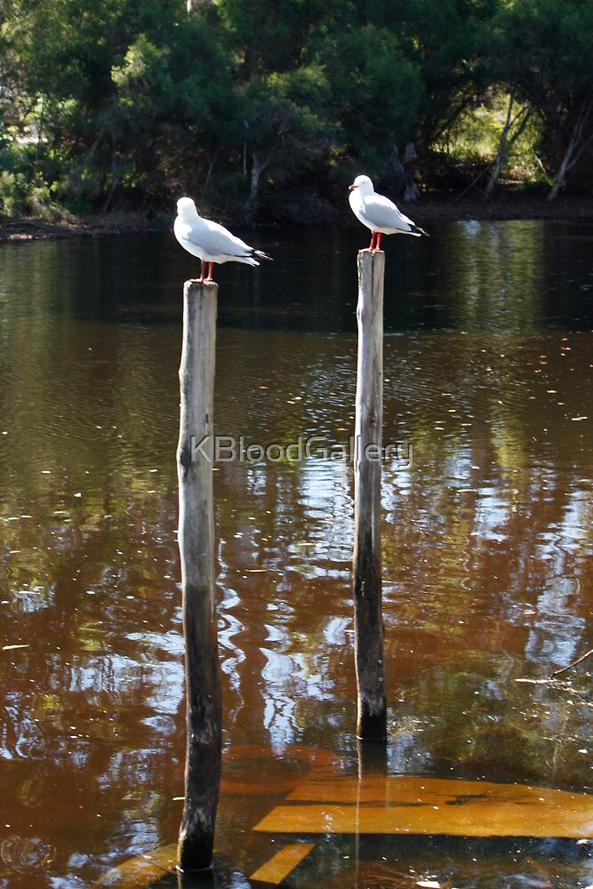 Denmark River, Seagulls by KBloodGallery