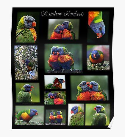 Rainbow Lorikeets Collage Poster