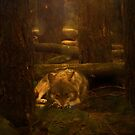 The lone wolf by strawberries