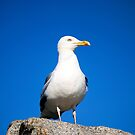 Seagull by Leon Woods