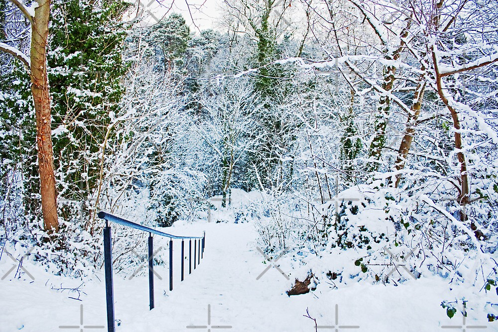 Steps in the Snow by Tom Gomez
