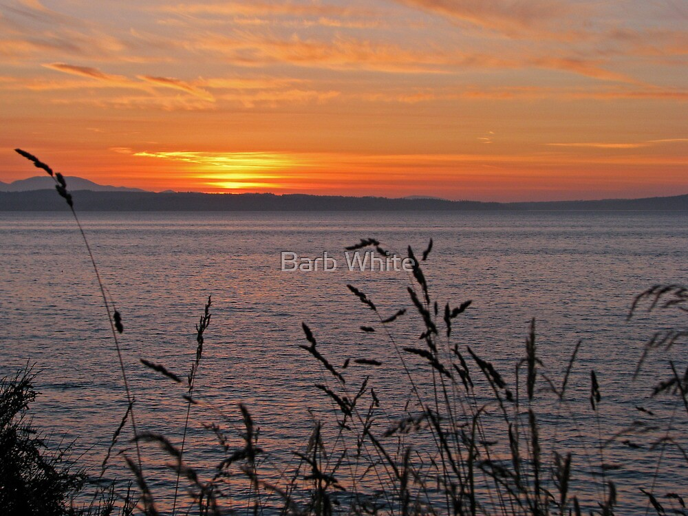 Seattle Sunset  by Barb White