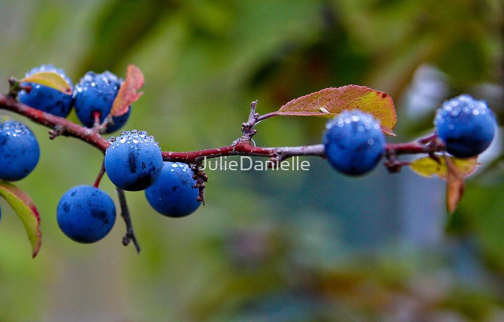 Blueberry Bliss by JulieDanielle