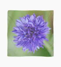 Cornflower Blue Bachelor Button Flower Scarf