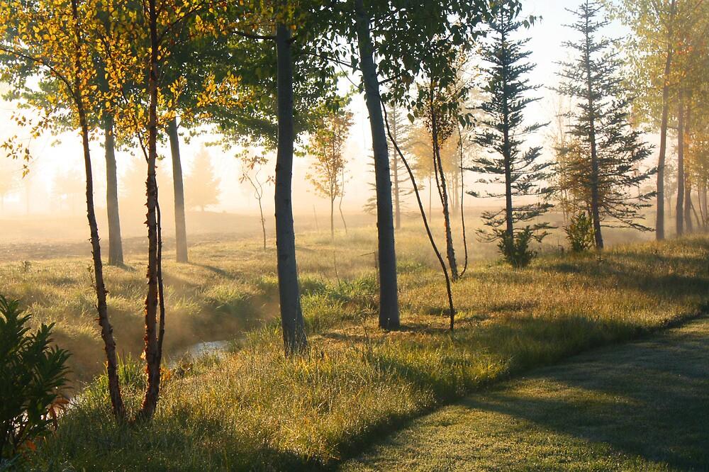Morning Sunrise and Trees by Sharon Hagler
