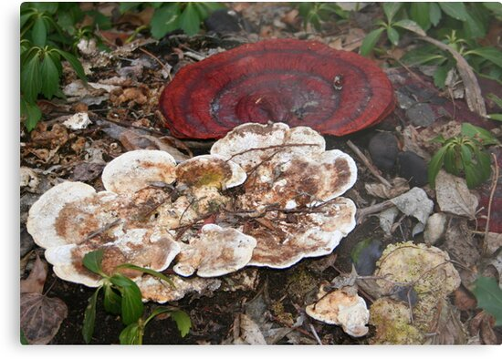 Contrasting Fungi by Laurel Talabere
