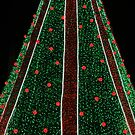 2018 National Christmas Tree by Cora Wandel