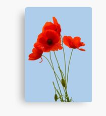 Delicate Red Poppies Vector Canvas Print
