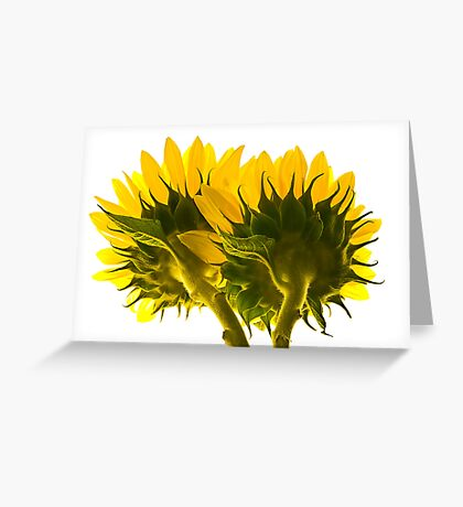 High Key Sunflowers Greeting Card