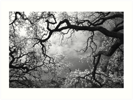 Sheltering Sky by Laurie Search