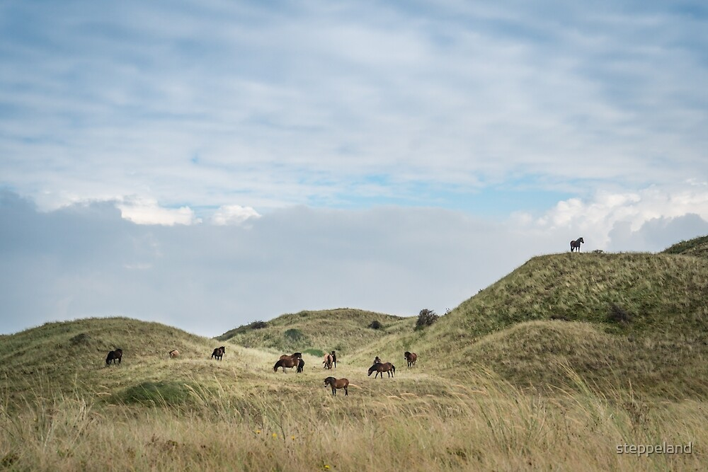 The Waiter - herd of Exmoor ponies in the dunes by steppeland