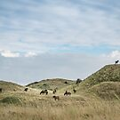 The Waiter - herd of Exmoor ponies in the dunes by steppeland