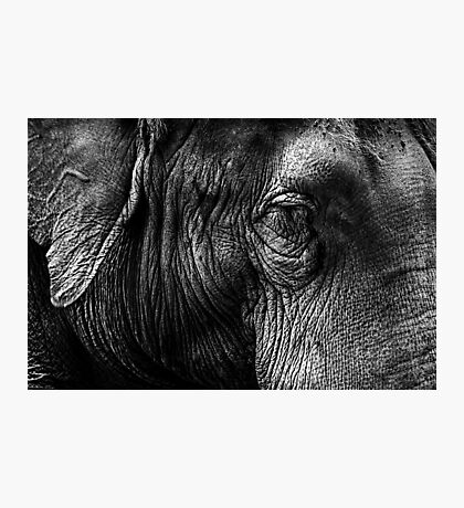 The Old Elephant Photographic Print