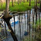 Okeefenokee Swamp by Jim Haley