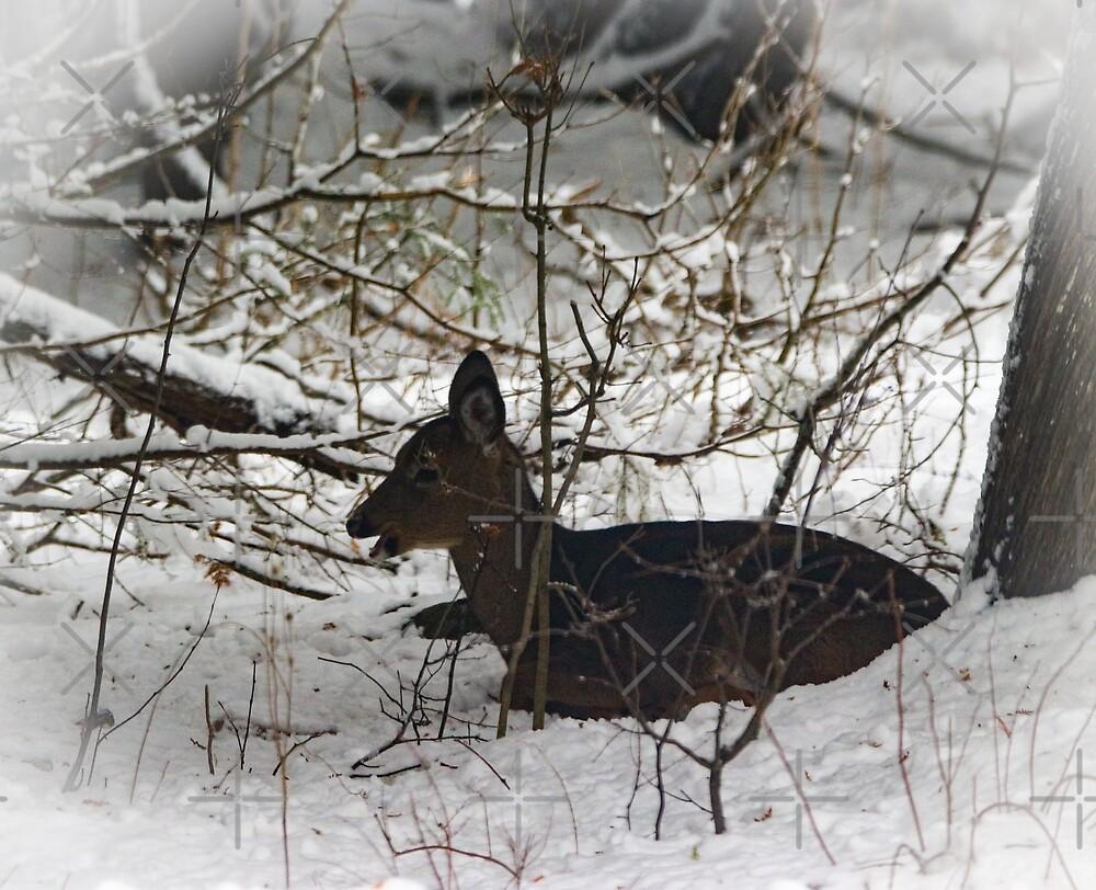 Resting fawn by debfaraday