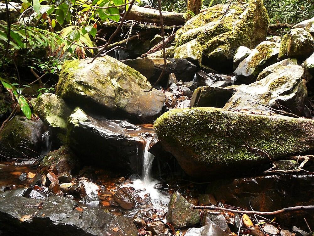 Quaint little waterfall-Barter Frere Tk Malanda by DecorDiva