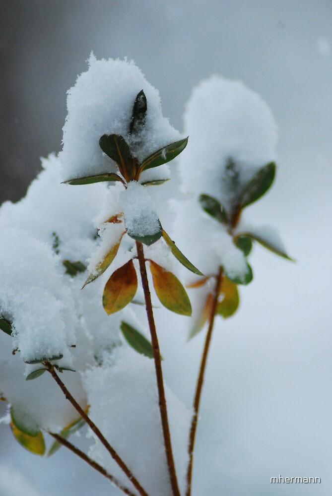 Fresh Snow Fall by mhermann