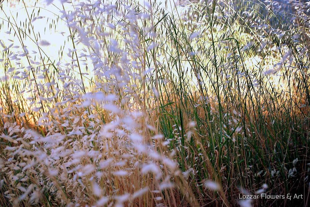 Simple Elements :  A little grass and a litttle sunlight by Lozzar Flowers & Art