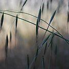 Base Elements : Grass Seeds by Lozzar Flowers & Art