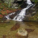 Small Mountain Stream - Vermont  by Stephen Beattie
