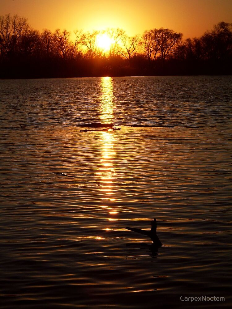 Perfect End - Oxbow Park Sunset by CarpexNoctem