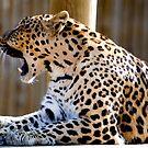 leopard 2 by nakomis