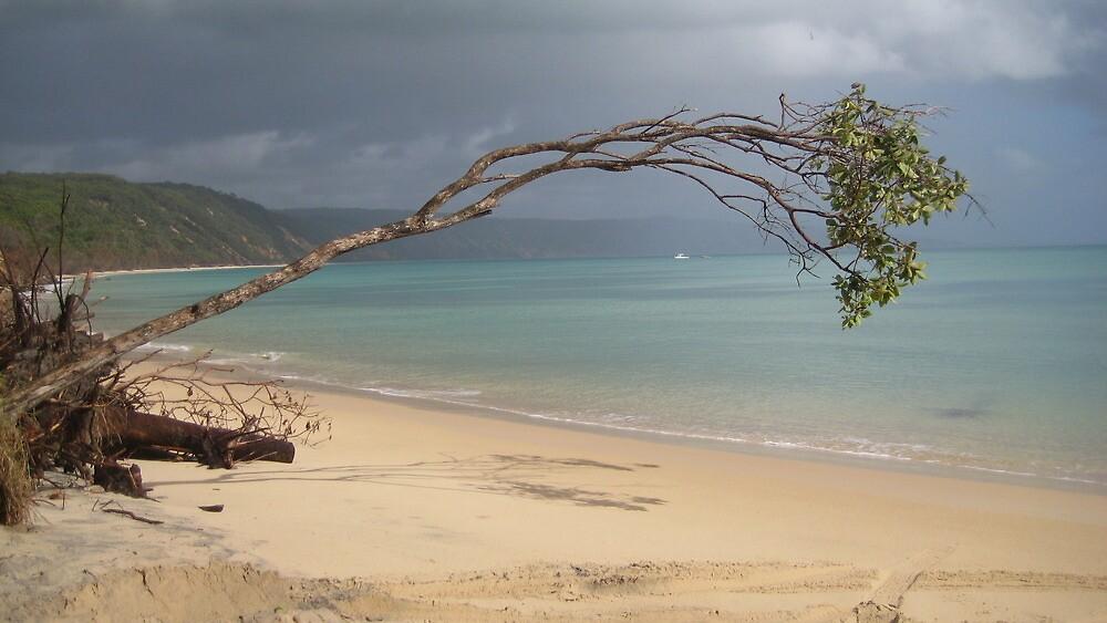 Fallen Tree - Australia by Ginelle Cooke