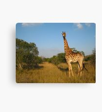 Live Free - South Africa Canvas Print