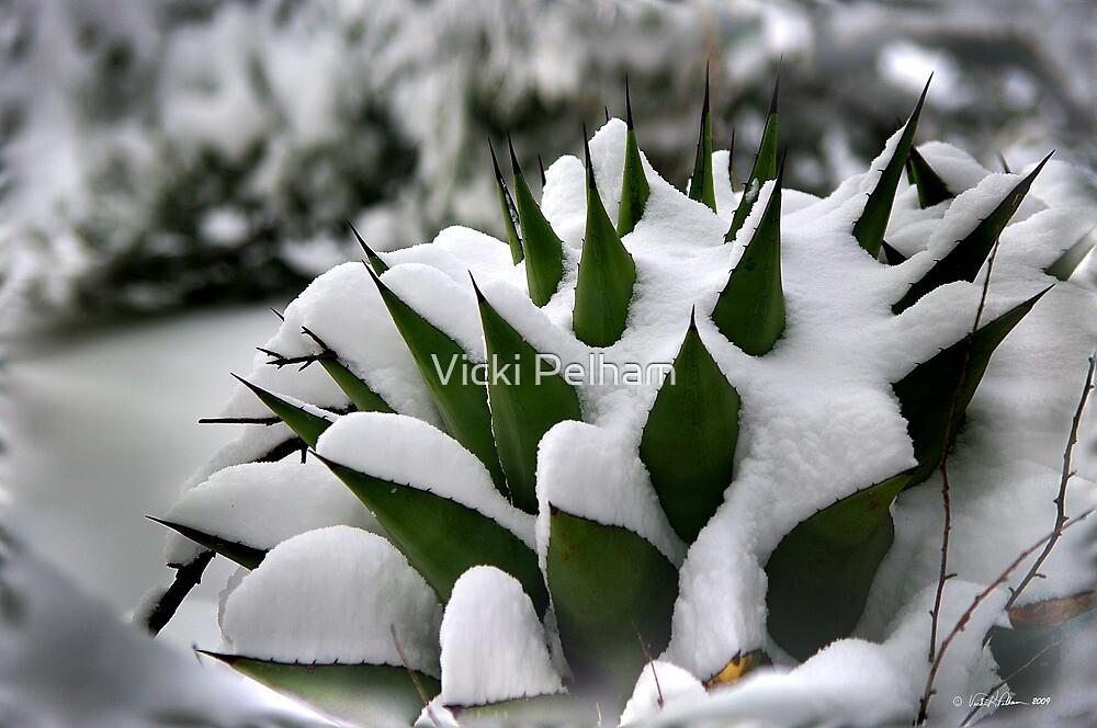 Freshly Fallen Snow by Vicki Pelham
