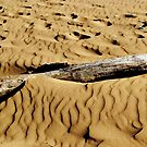Sandy Log by oddoutlet