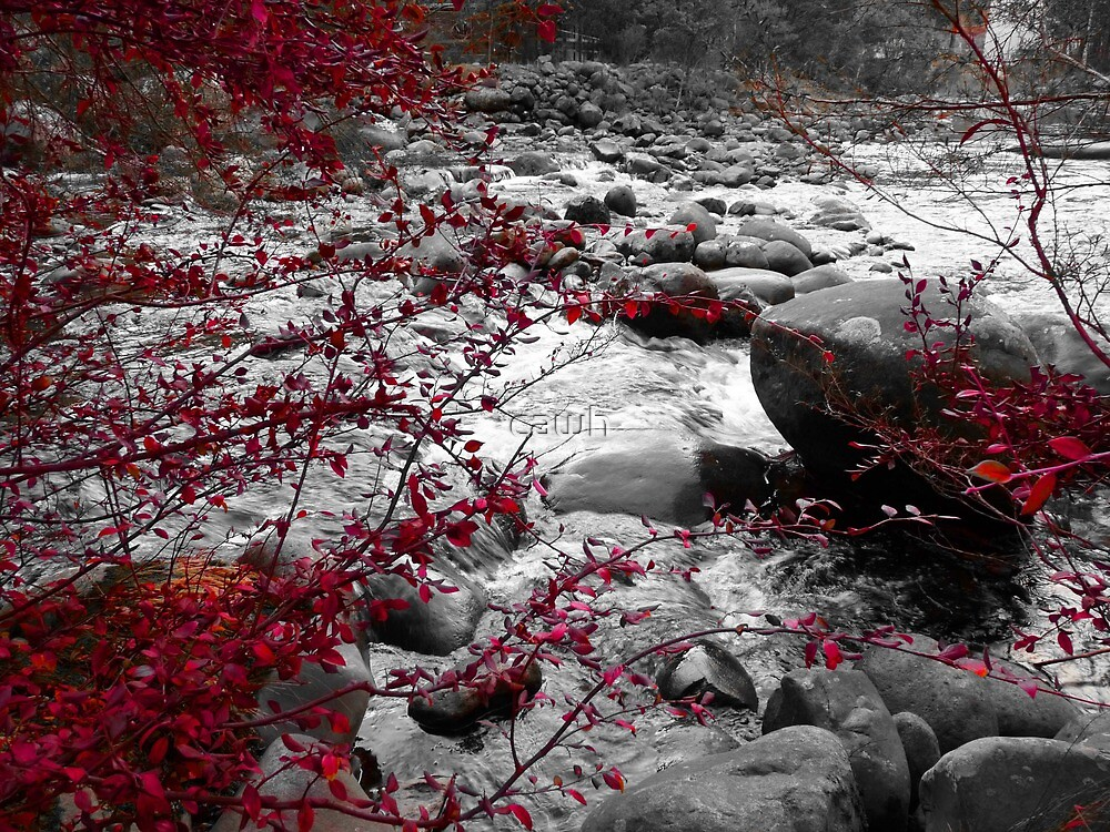 Red Vines along the creek by cawh