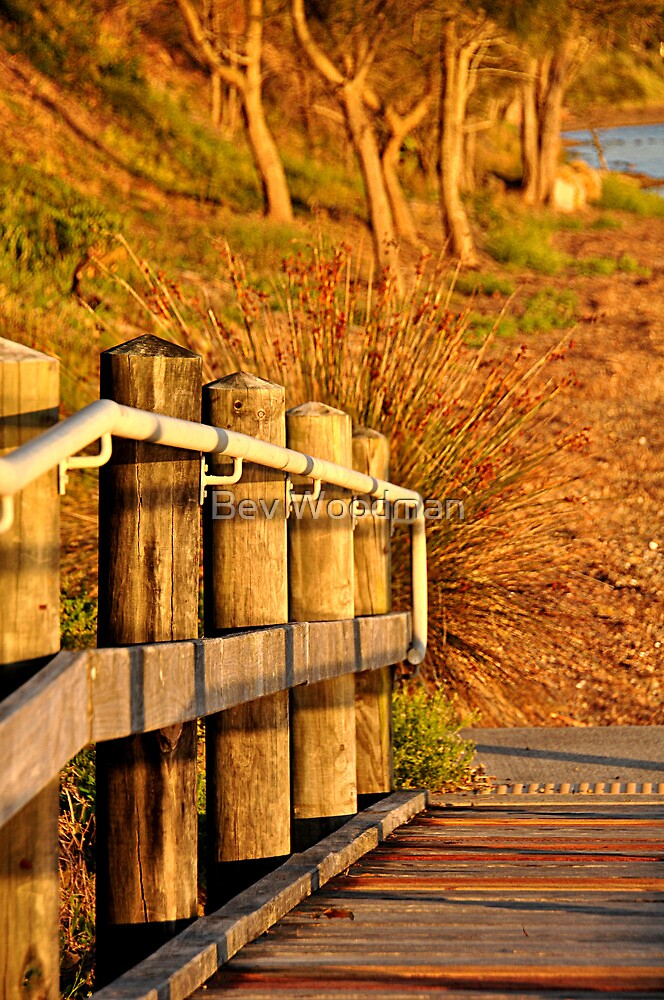 Golden Glow - Green Point Reserve NSW by Bev Woodman