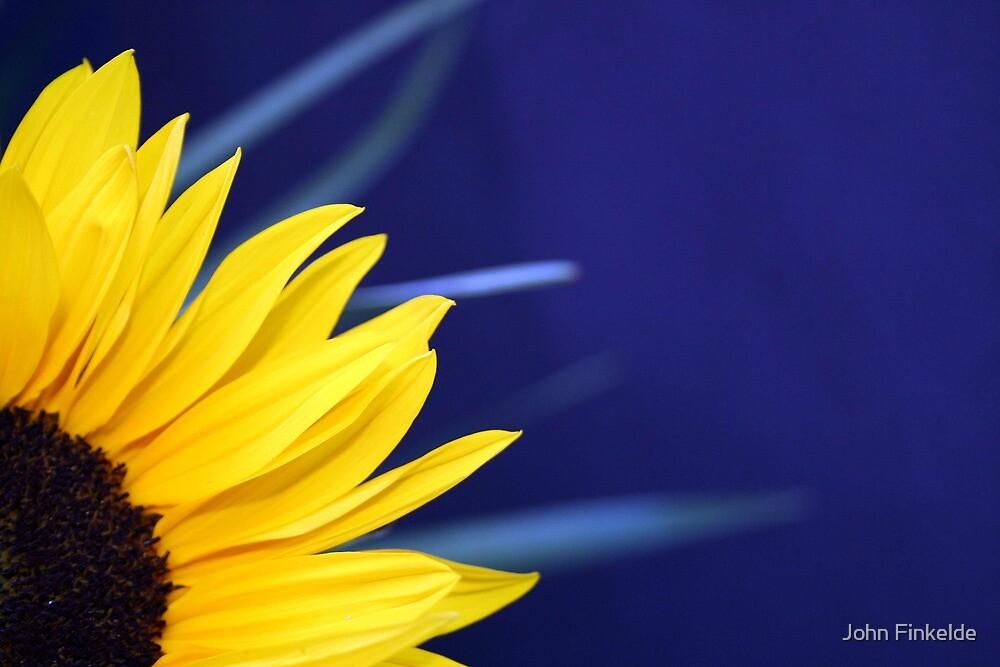 Sunflower blue haze by John Finkelde