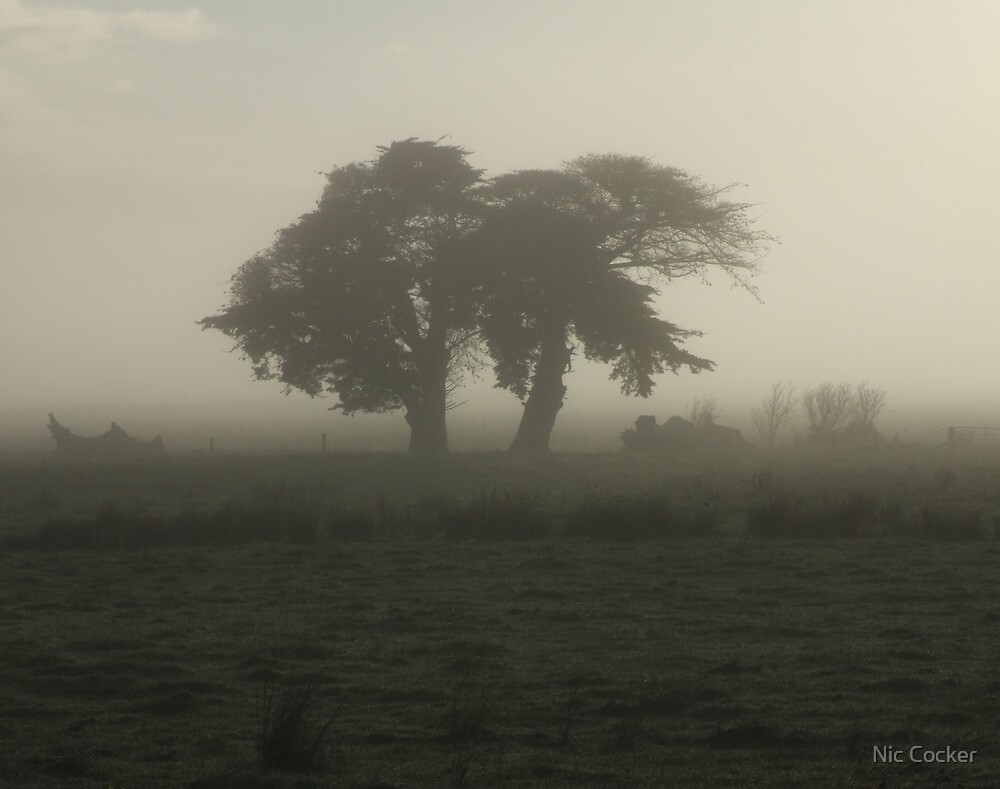 Trees in the mist by Nic Cocker